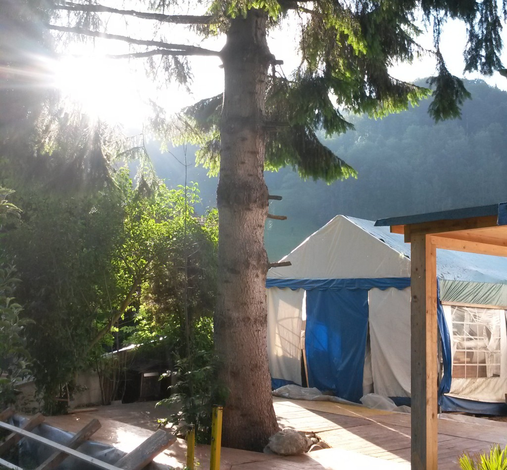 Spezialfällung im Garten in Fischenthal