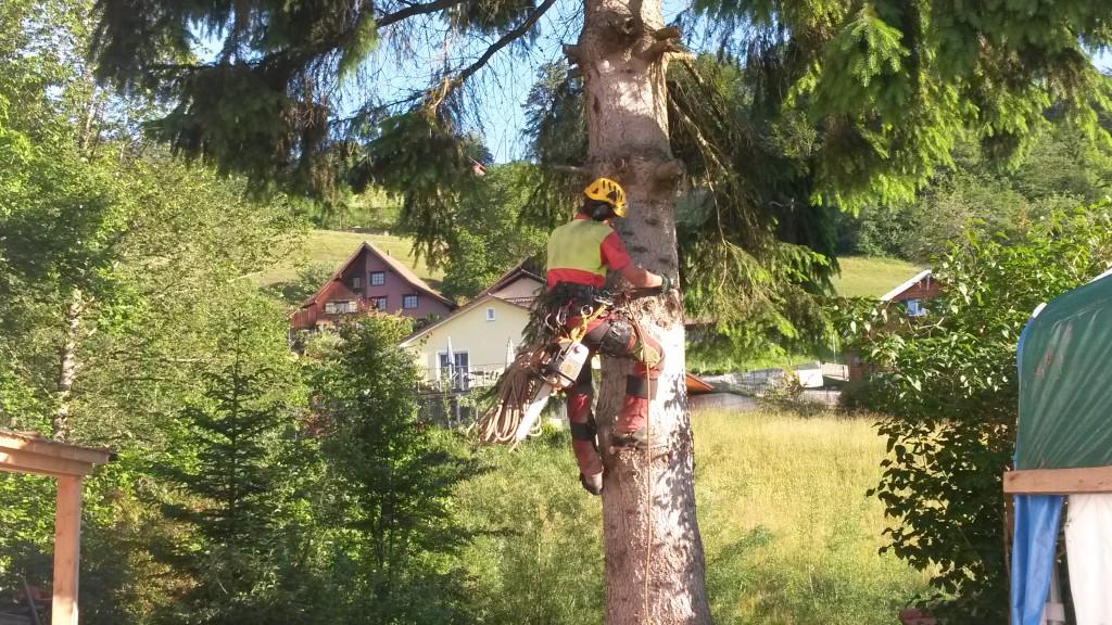 Kletterer bei der Arbeit für die Baumfällung in Fischenthal